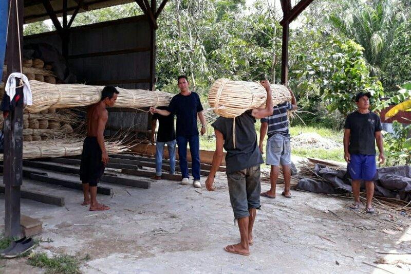 Harga rotan Rp3.000 per kg di Kotawaringin Timur