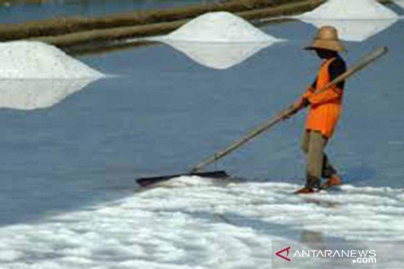 Produksi garam Pamekasan capai 125 ribu ton
