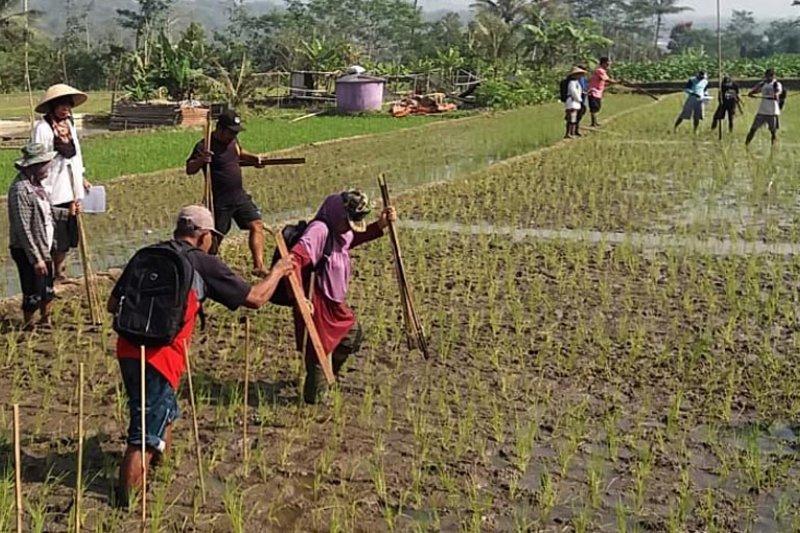 Disperpa Kota Magelang kenalkan agroekosistem sawah ke petani