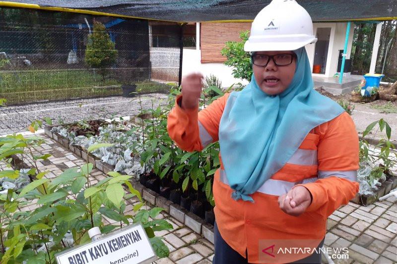 Agincourt siapkan 5.234 bibit tanaman untuk reklamasi tambang Martabe