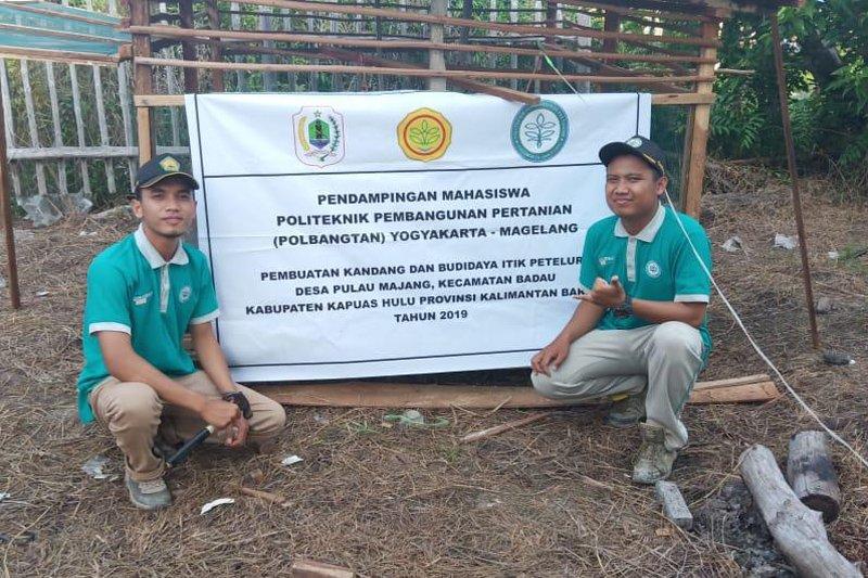 Mahasiswa Polbangtan YoMa beri penyuluhan budi daya itik petelur di Desa Pulau Majang