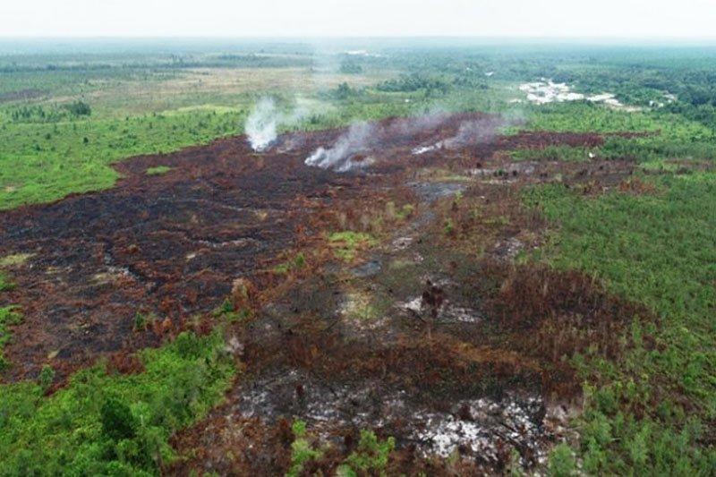 Pemkab Kotim  telusuri dugaan kebakaran lahan hutan tanaman industri