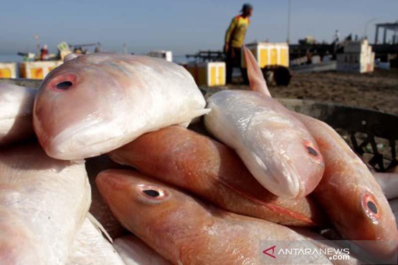 Pasokan ikan menurun