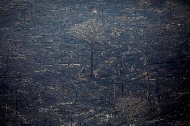 Pesawat tempur Brazil bantu proses pemadaman kebakaran di Amazon