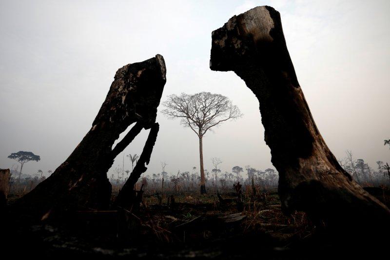 Paus Fransiskus seru komitmen global atasi kebakaran Amazon