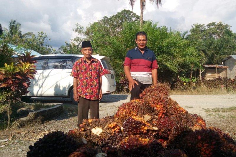 Masyarakat sejahtera dan kawasan berkembang pesat berkat kelapa sawit