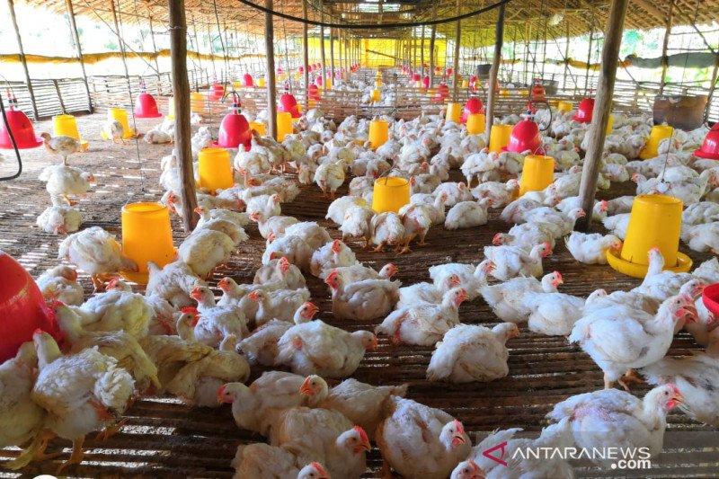 Spanduk Ayam Potong - gambar spanduk