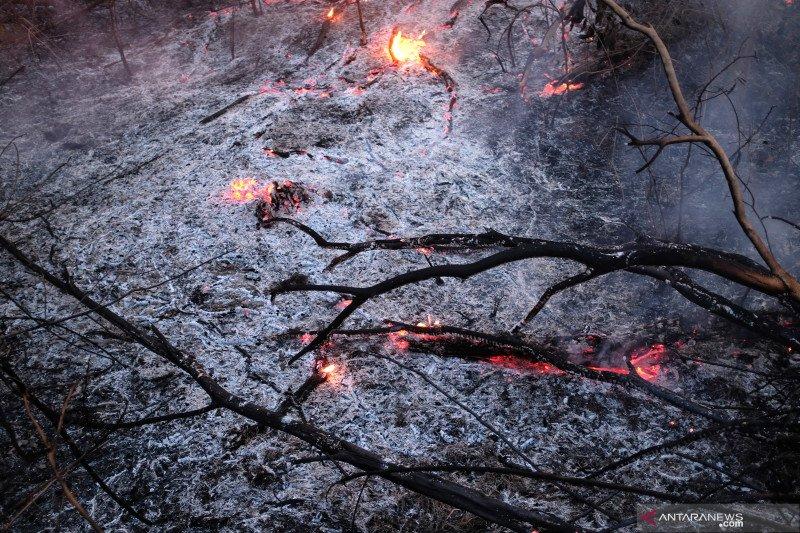 Kebakaran hutan Amazon di Brazil