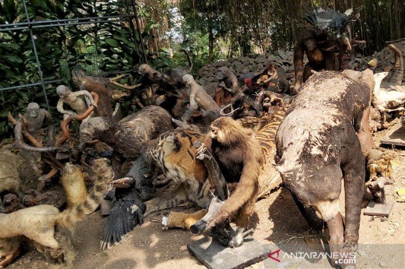 263 hewan yang diawetkan Kebun Binatang Bandung dimusnahkan