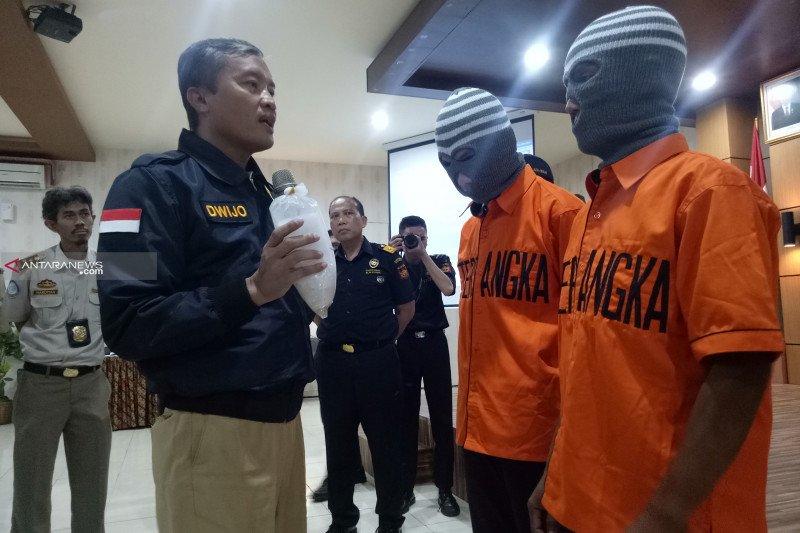 Bea Cukai Palembang gagalkan penyelundupan 65.000 ekor benih lobster