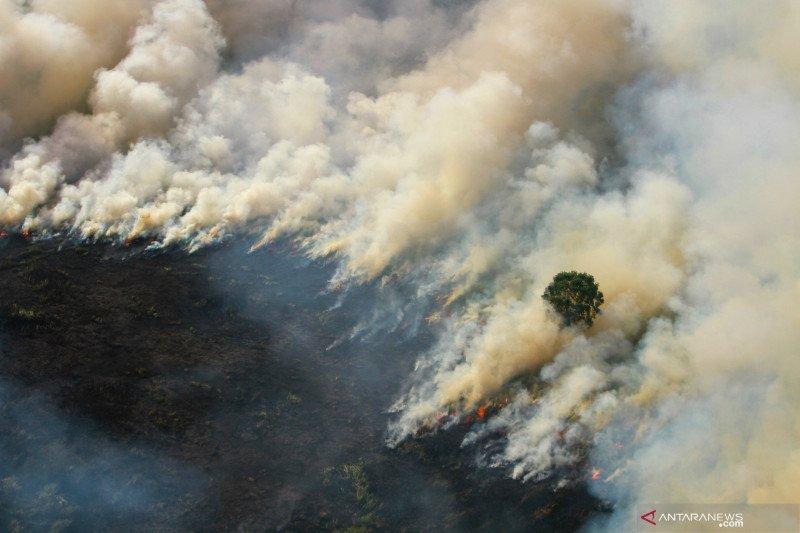 BMKG: Kebakaran hutan terdeteksi hingga Semenanjung Malaysia