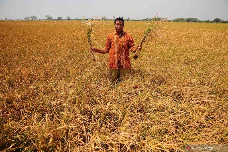 Antisipasi gagal panen, petani  Kendari diimbau ikut asuransi