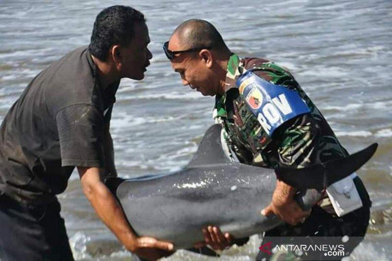 TNI selamatkan ikan luimba-lumba terdampar di Pantai Tulungagung