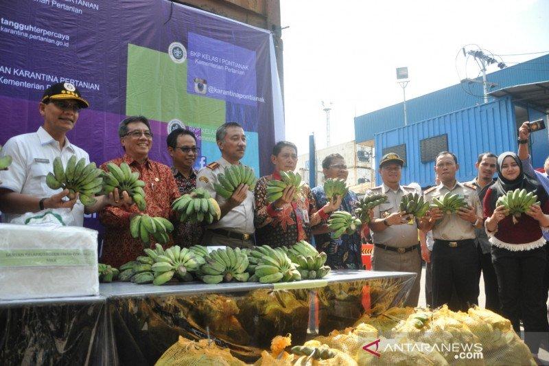 Potensi ekspor pisang dari Kalbar terbuka lebar