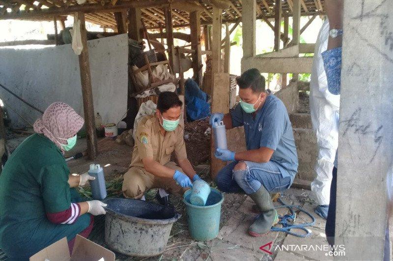 Kulon Progo memberi vaksin hewan ternak di tiga kecamatan