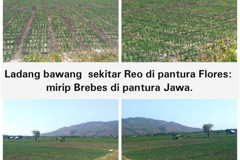 Ladang Bawang