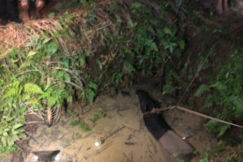 BBKSDA Sumut selamatkan tapir diikat warga