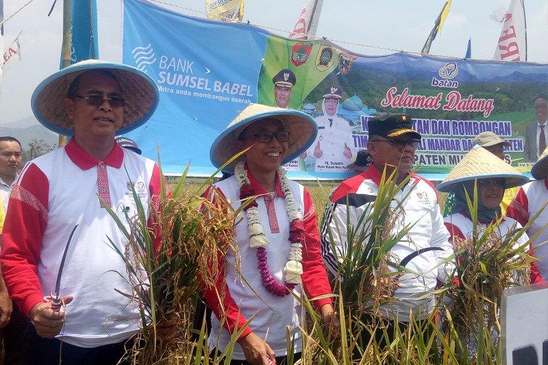 Batan tingkatkan keunggulan varietas padi lokal