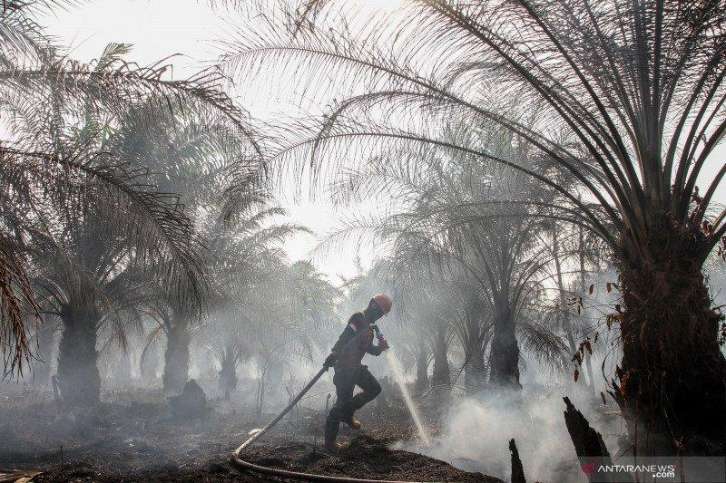 Karhutla Riau - Jarak pandang 10 meter, TNI kewalahan padamkan kebakaran lahan di Pulau Gelang