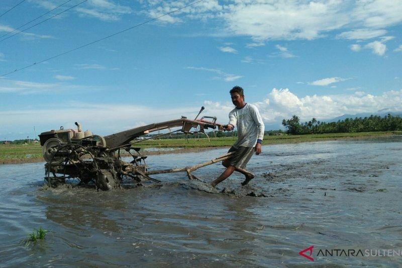 Target produksi padi ladang Parigi Moutong 10.230 ton