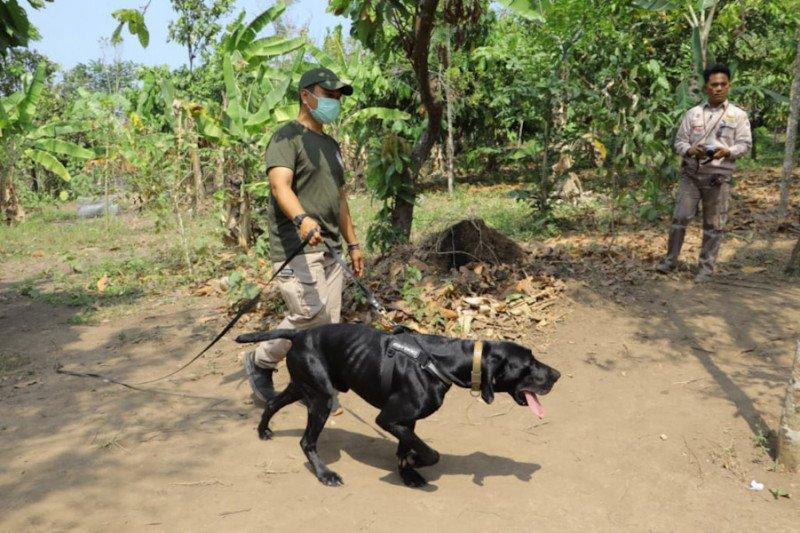 Polda Lampung bakal gunakan anjing untuk lacak penyelundupan satwa dilindungi
