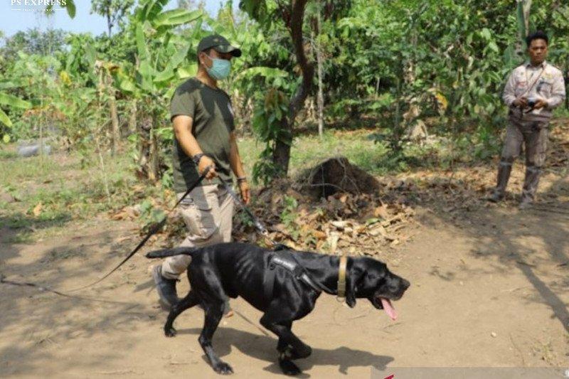 Polda Lampung gunakan anjing pelacak untuk tangkap penyelundup satwa
