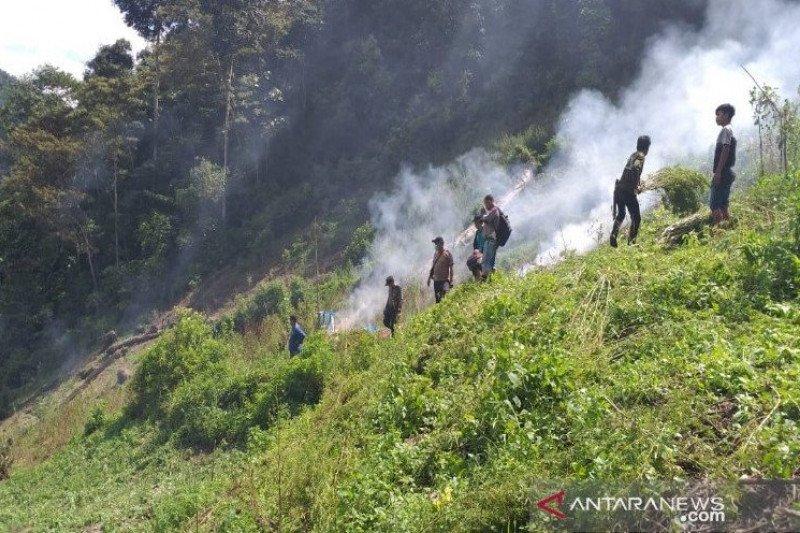 5 hektare ladang ganja ditemukan dan langsung dimusnahkan di Panyabungan Timur