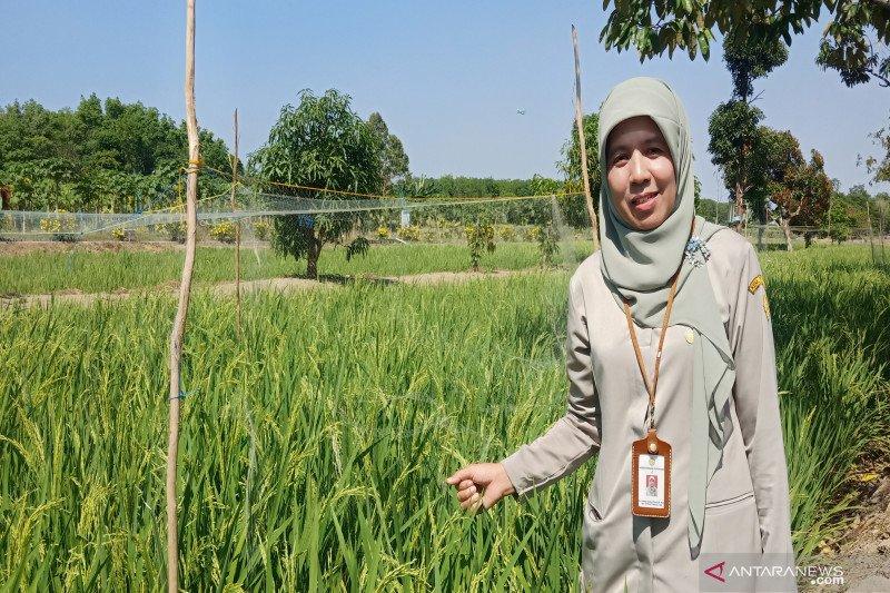 Balittra gencarkan pengelolaan lahan rawa pasang surut ramah lingkungan