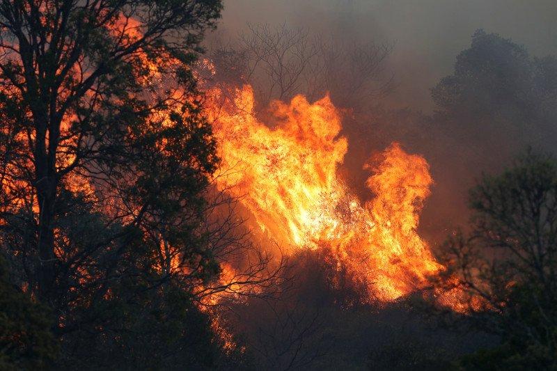 Angin kencang perparah kebakaran hutan di Australia