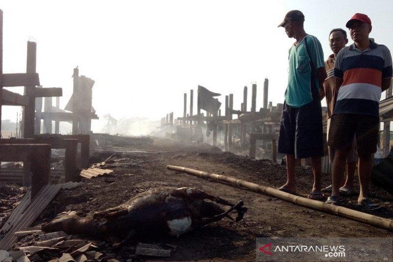 Kandang terbakar, 163 kambing di Kudus mati terpanggang