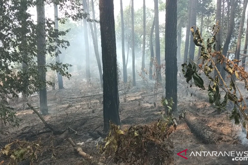 10 hektare lahan pinus di Bukit Pinang Gadiang Tanah Datar terbakar (Video)