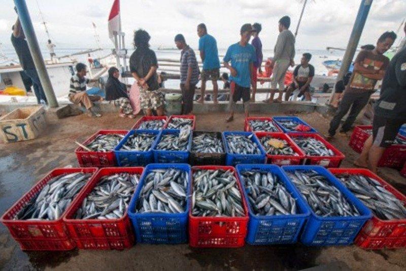 Pelabuhan pendaratan ikan yang higienis