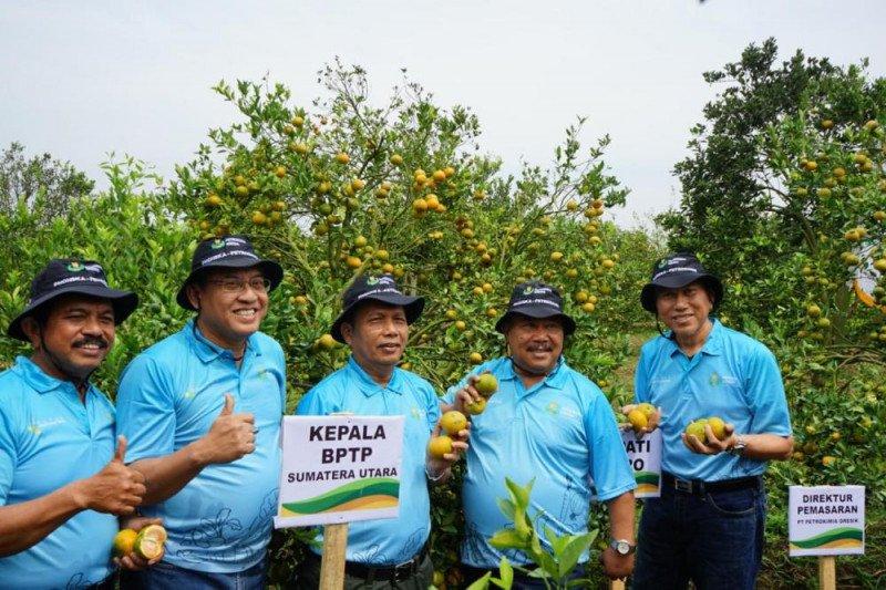 Hasil panen jeruk meningkat, inovasi pupuk NPK Petro Nitrat dari Petrokimia Gresik