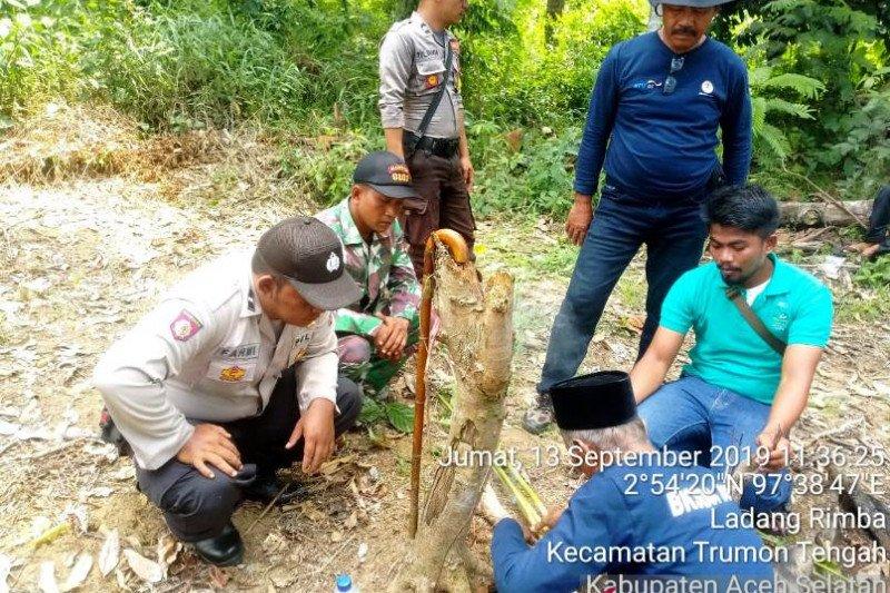 Pawang didatangkan untuk atasi gangguan harimau di Aceh Selatan