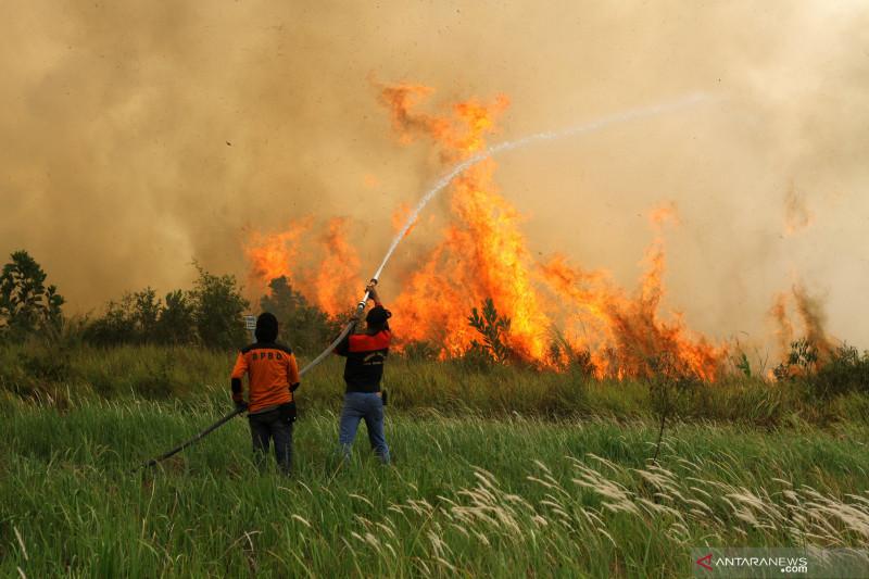 Kebakaran lahan gambut di Kalsel semakin meluas
