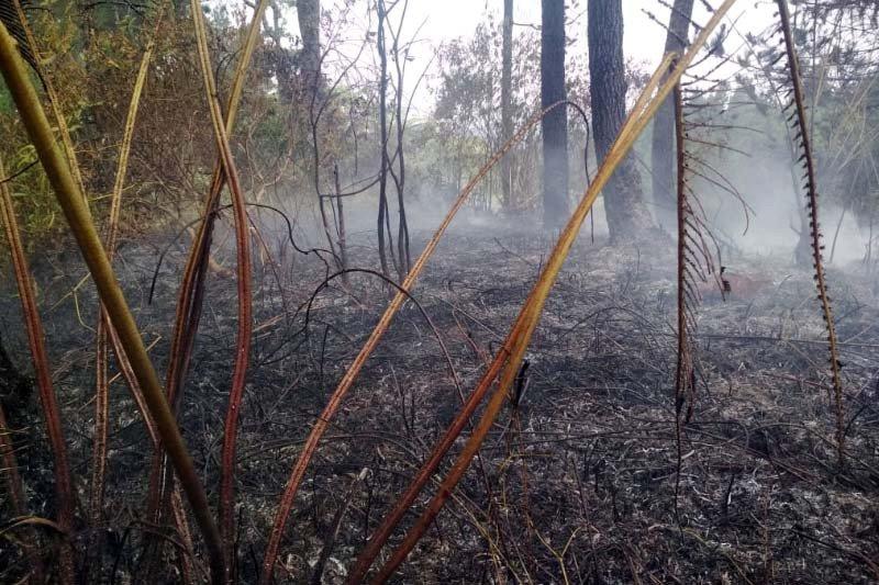 Perhutani: Kebakaran hutan di lereng Gunung Slamet dapat dikendalikan
