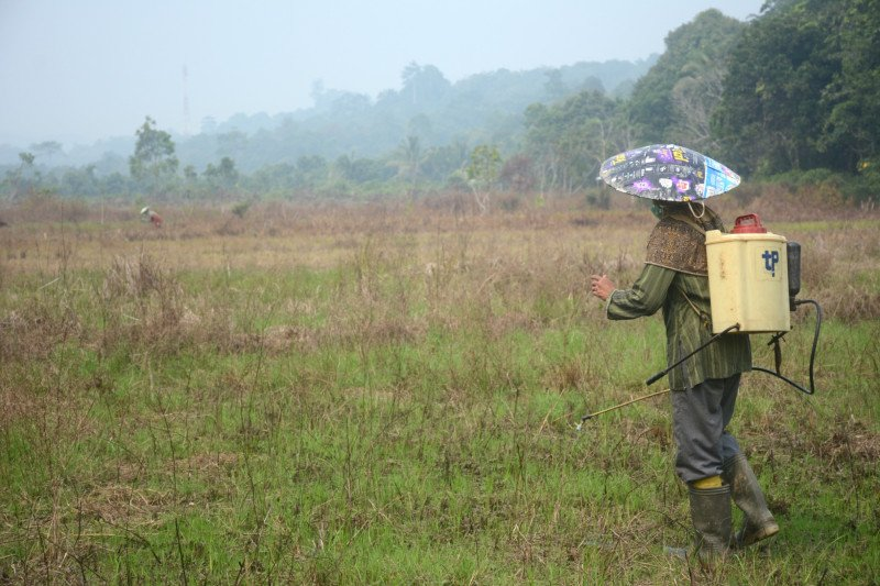 Petani Kaltara bantah bakar lahan