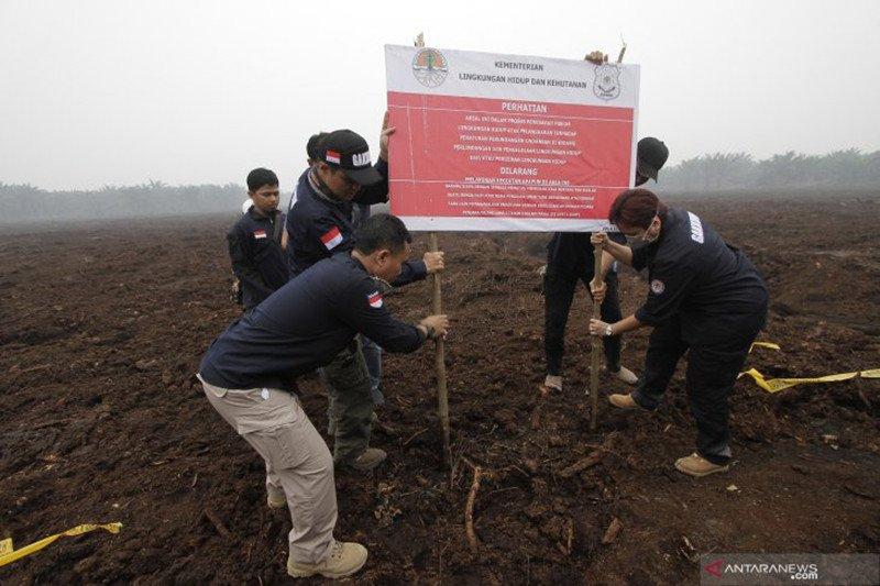 KLHK segel lahan perusahaan sawit Malaysia yang diduga  dibakar di Riau