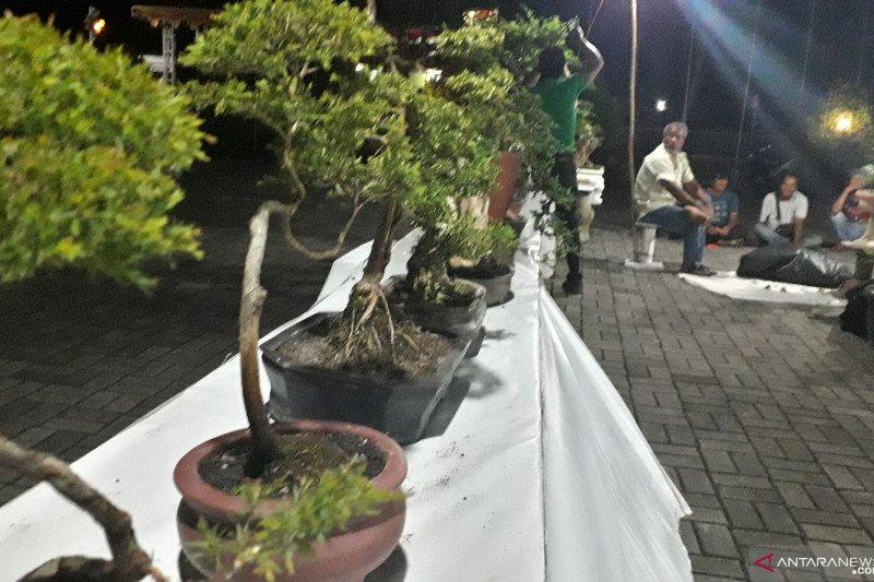 Komunitas pamerkan bonsai tanaman endemik di Mentok