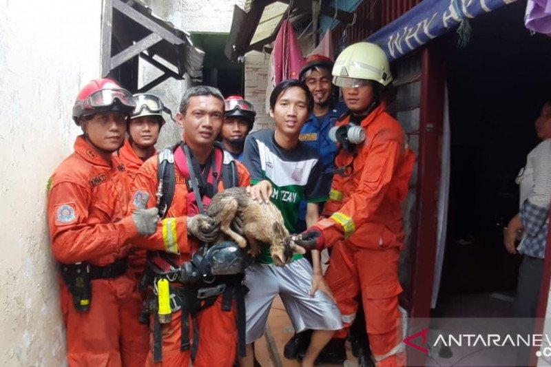 Damkar Jaktim turun ke sumur selamatkan kucing kampung