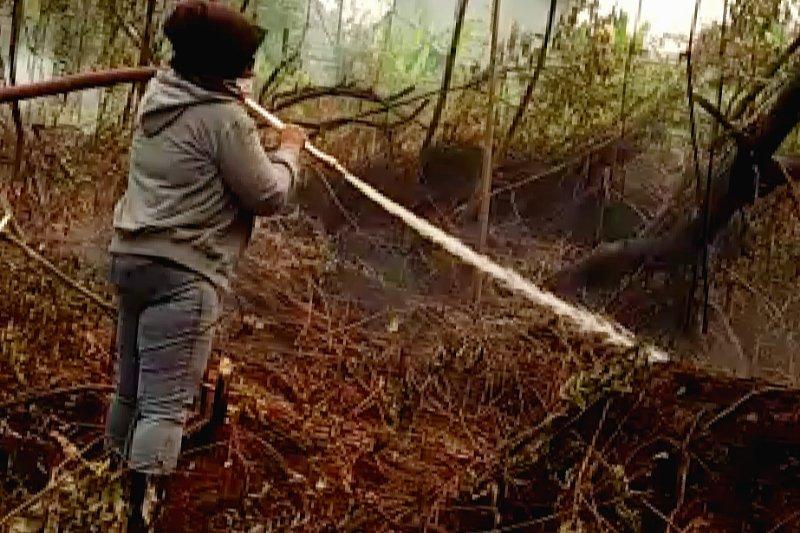 Perlu aksi nyata membantu menanggulangi karhutla, kata legislator Kalteng