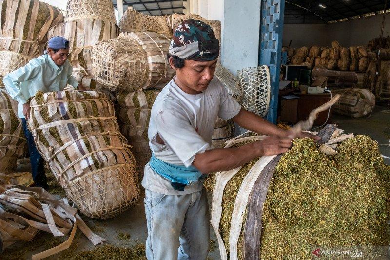 Kenaikan cukai rokok akan berimbas pada petani tembakau