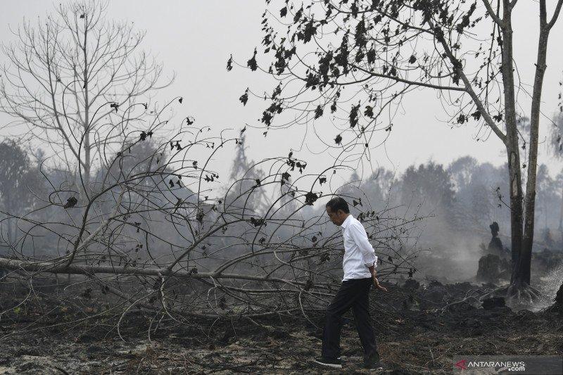 Status siaga darurat karhutla Riau berakhir, begini luas kebakarannya