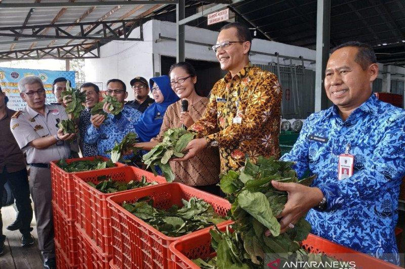 Pemerintah perbanyak negara tujuan ekspor daun gulinggang