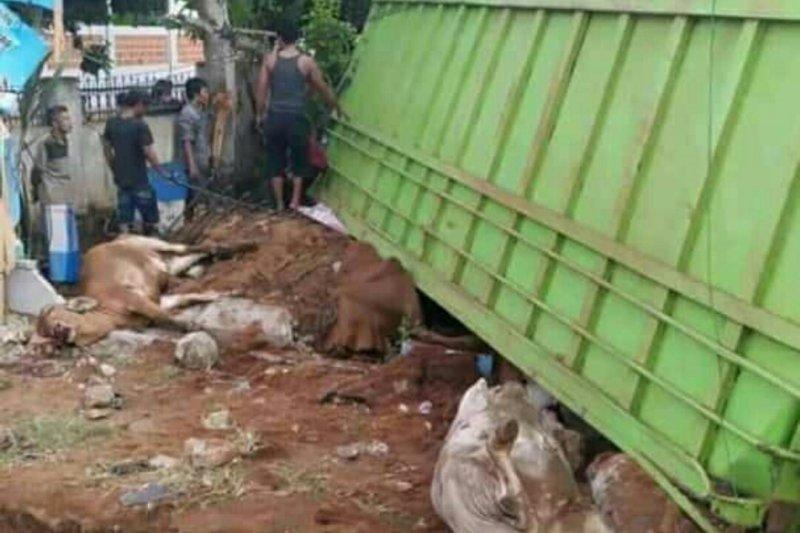 Satu unit truk bermutan sapi terguling di Jalinpatim Lampung Timur