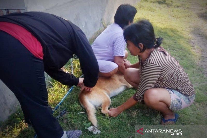 Legislator Barito Timur dukung vaksinasi anjing berantas rabies