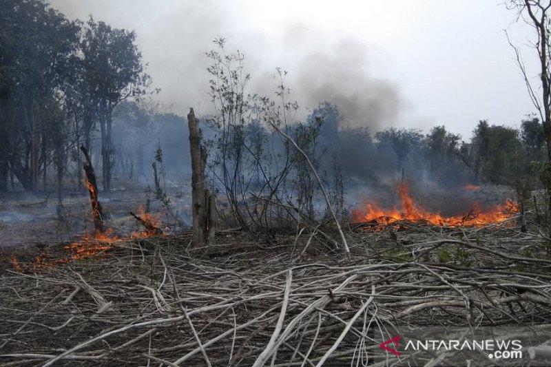 Ratusan hektar kawasan Taman Nasional Danau Sentarum terbakar