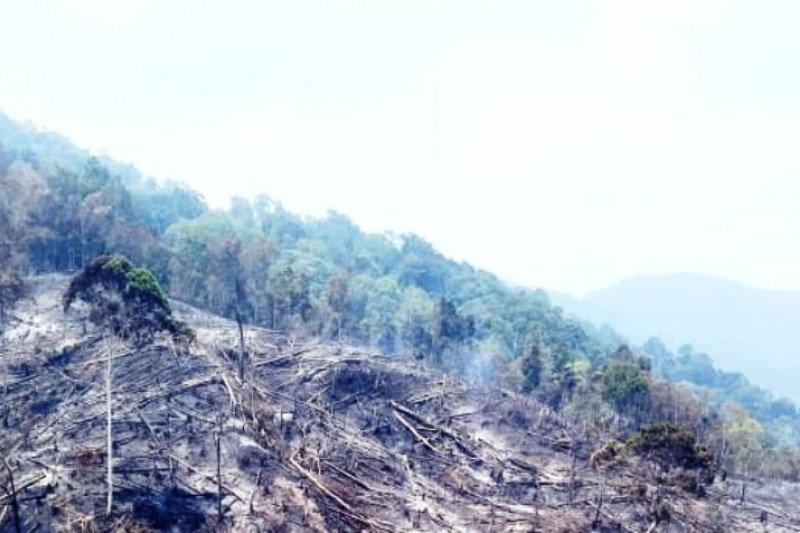 Dua hektare lahan perkebunan di Agam dibakar warga, ini awalnya
