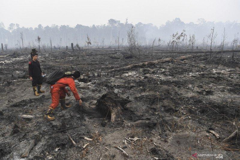 328.724 hektare hutan-lahan terbakar selama Januari sampai Agustus 2019