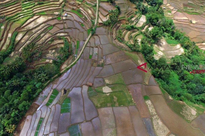 Teknologi pangan perlu didukung ketersediaan lahan